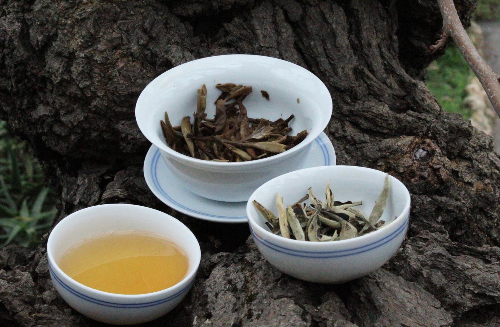 Familles de thés