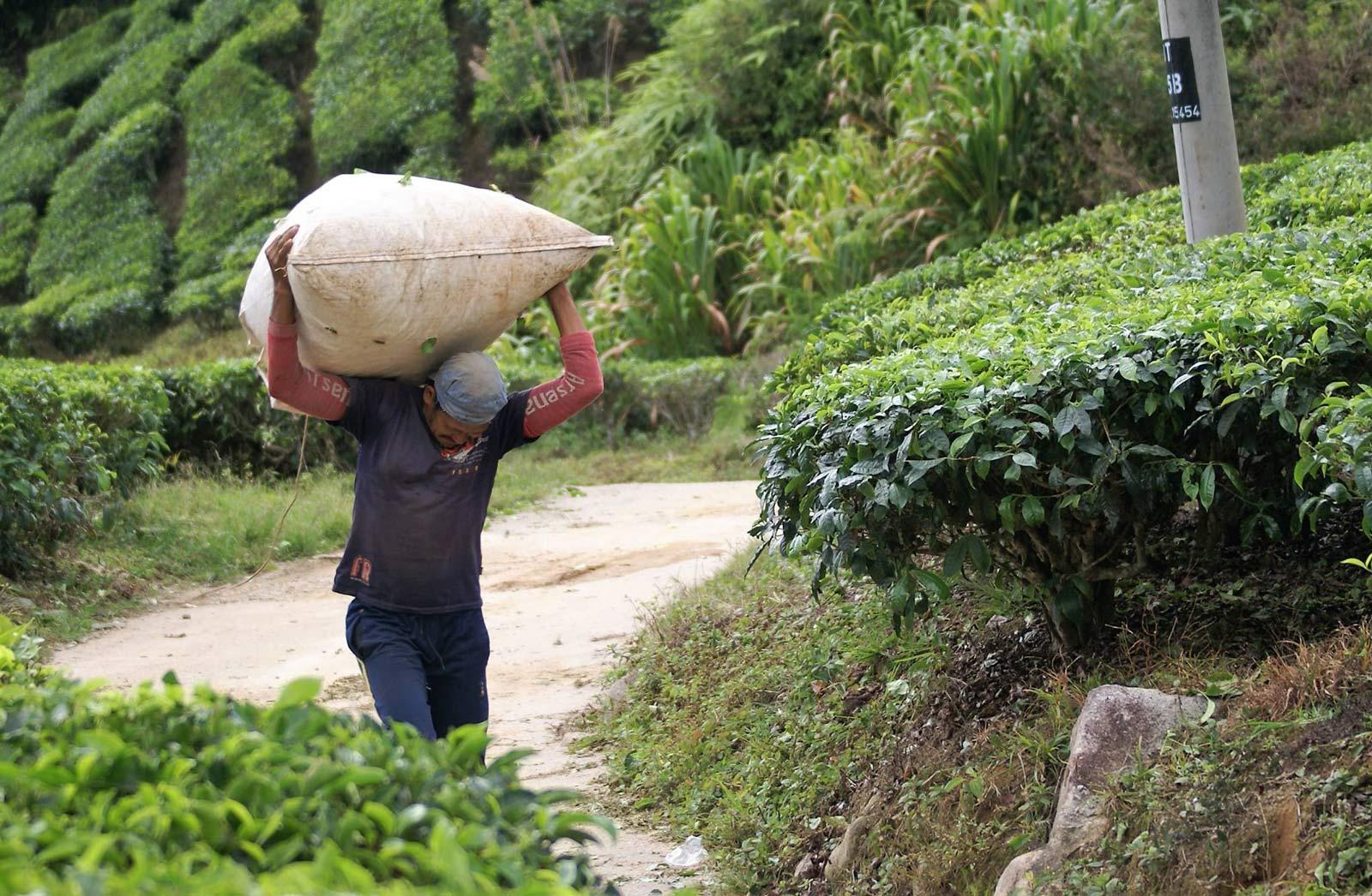 Qu'est-ce que la Journée Internationale du Thé ?